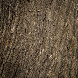 Old tree cracked bark background natural pattern Stock Photography