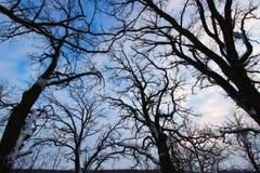 Old Tree Creeping Skywards Stock Photos