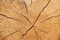 Old Tree Cross Section Royalty Free Stock Images