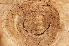 Old Tree Cross Section Royalty Free Stock Photos