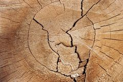 Old Tree Cross Section Stock Image