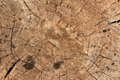 Old tree cut. Abstract background and texture Royalty Free Stock Photos