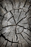 Old tree cut background Royalty Free Stock Photography