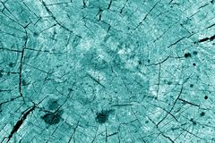 Old tree cut in cyan tone. Abstract background and texture stock photos
