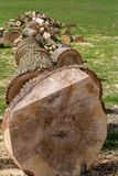 Big log of a cut tree, close-up royalty free stock photos