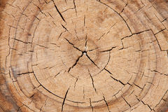 Old tree cut down close up macro Royalty Free Stock Images