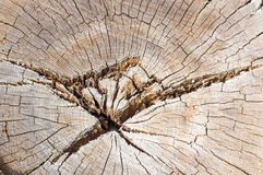 Old tree cut structure Stock Image