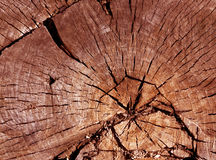Old tree cut surface. Stock Photo
