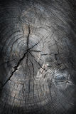 Old tree cut texture Stock Photo