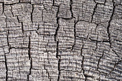 Old tree cut texture Royalty Free Stock Images