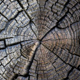 Old tree cut texture Royalty Free Stock Photo