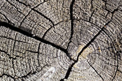 Old tree cut texture Stock Image
