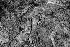 Old tree cutout showing woodgrain texture stock image