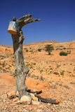 Old tree in the sandy desert in Matmata Royalty Free Stock Photography