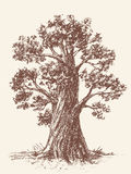 Old tree Royalty Free Stock Image