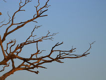Old tree. End of life Royalty Free Stock Photos