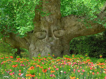 Old tree with eyes, keeper of the garden Royalty Free Stock Image