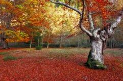 Old tree Stock Image