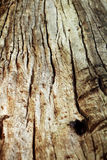 Old Tree in the forest. Closeup old Tree stump in the wild Royalty Free Stock Images