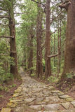 Tree Forest and Stone Trail in Kumano Pilgrimage Route. Kansai, Japan, Asia. Unesco Site Stock Images