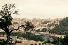 Old tree in front of Lisbon Royalty Free Stock Images