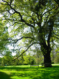 Old tree in the garden Royalty Free Stock Photo
