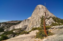 Old tree and granite dome in Yosmite National Park Royalty Free Stock Images