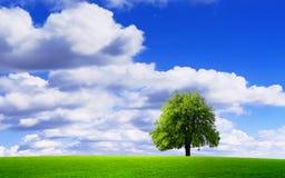 Wonderful natural environment Royalty Free Stock Images