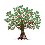 Old Tree with Green Leafs, Roots and Red Apples. Vector Illustration stock illustration