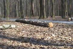 Old tree on the ground stock photos