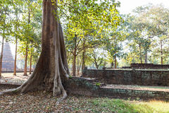Old Tree Grow in Laterite Stupa Foundation at Wat Pra Khaeo Kamphaeng Phet Province, Thailand Stock Photos