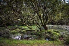 Old Tree growing on Dartmoor England UK stock photos