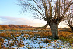 Old  tree has lost its zest. In November Stock Photo