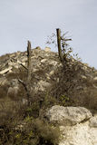 Old tree on the hill of stones Royalty Free Stock Photography