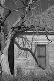 Old tree and house. Black and white view of old bare branched tree next to wooden house Stock Photography