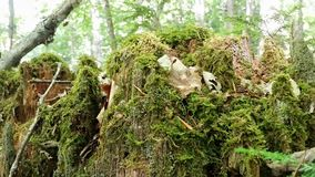 Old tree from inside covered by moss with forest in background Royalty Free Stock Photos