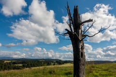 Old tree. An old tree keep stand at mountain on a cloudy day Stock Image