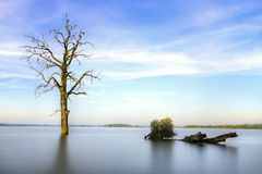 Old tree in lake at sunrise landscape Royalty Free Stock Images