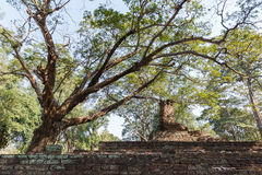 Old Tree and Laterite Stupa at Wat Pra Khaeo Kamphaeng Phet Province, Thailand Stock Images