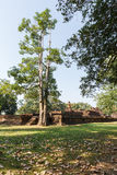 Old Tree and Laterite Stupa at Wat Pra Khaeo Kamphaeng Phet Province, Thailand Royalty Free Stock Photography