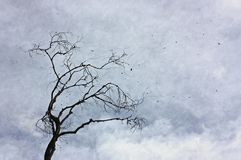 An old tree with leafy leaves against a cloudy sky. stock photos