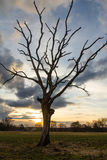 Tree at sundown Stock Photos