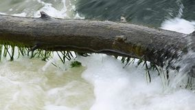 Old fallen tree in a big stream of water. The old tree log is washed by a large stream of water stock footage