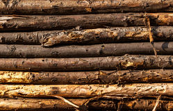 Old tree logs. In a wooden wall Stock Photos