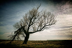 Old tree Stock Image