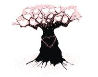 Old Tree of love Stock Photography