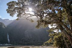 Old tree in the Milford Sound Stock Photography