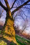 Old tree moss. Green nature Stock Image
