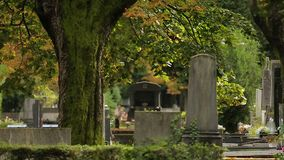 Old tree with moss standing between graves at Mirogoj cemetery, attraction. Stock footage stock footage