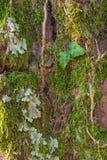Old tree mossy bark texture Stock Photo